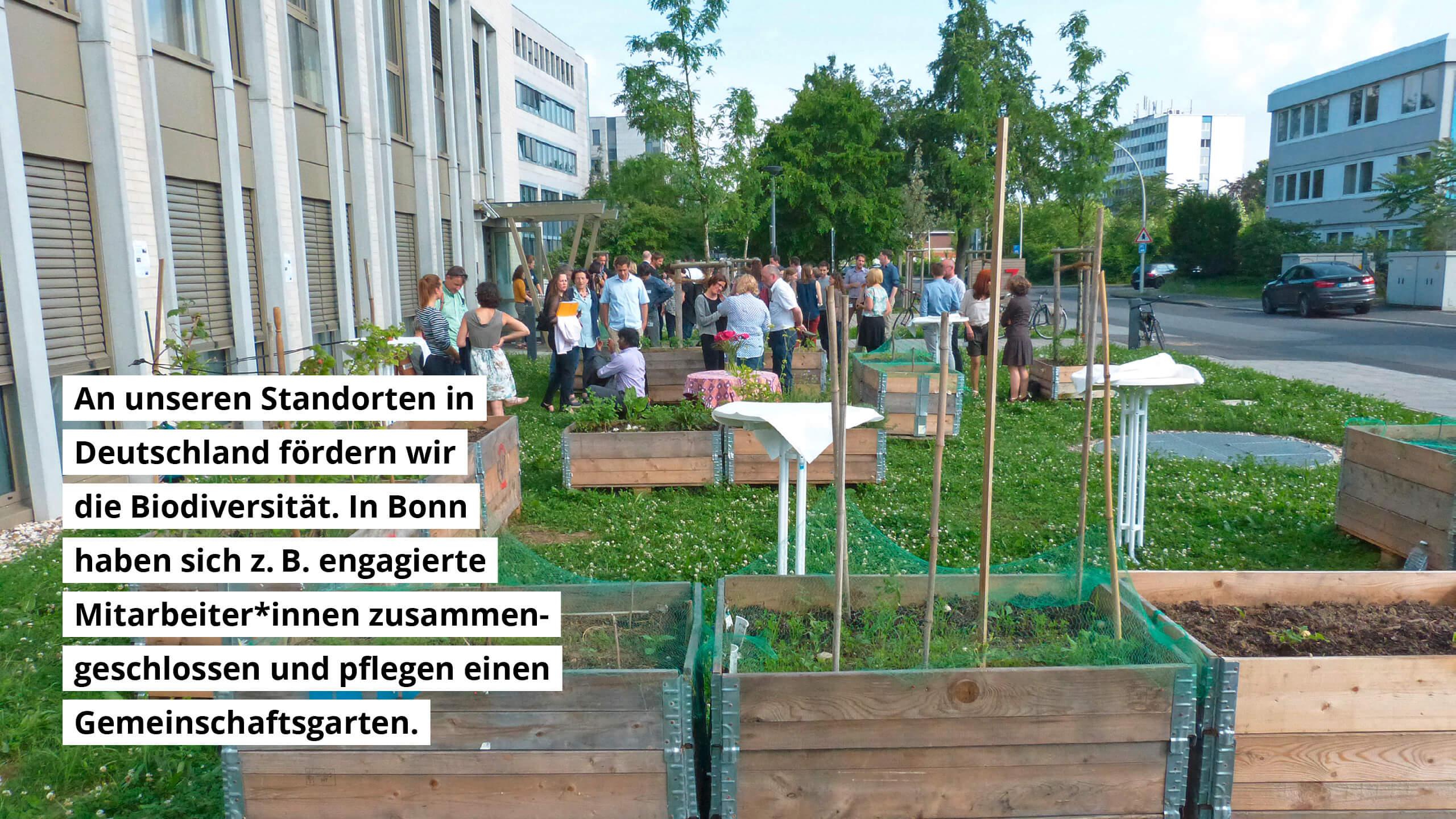 An unseren Standorten in Deutschland fördern wir die Biodiversität. In Bonn haben sich z.B. engagierte Mitarbeiter*innen zusammengeschlossen und pflegen einen Gemeinschaftsgarten.